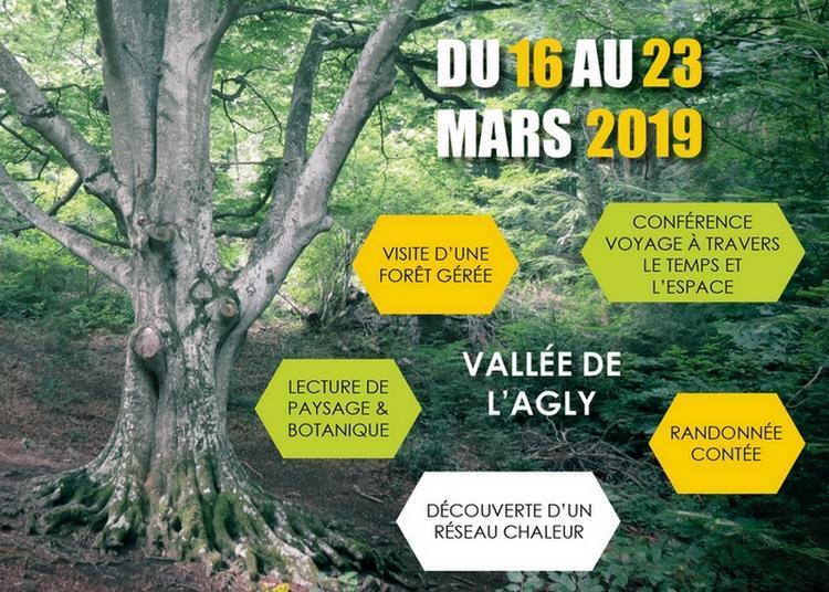 Journées Internationales des Forêts 2019