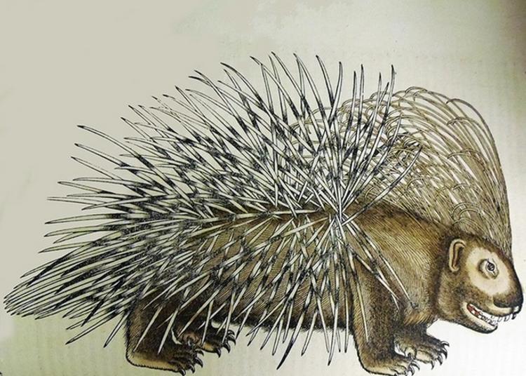 [re]découvrir : Un Regard Animal ! à Chalon sur Saone