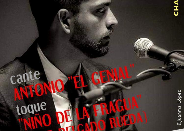 Recital de Cante Flamenco à Paris 20ème