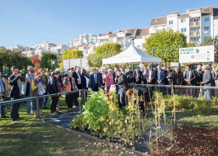 Récolte Des Graines Du Jardin Vavilov à Epinay sur Seine