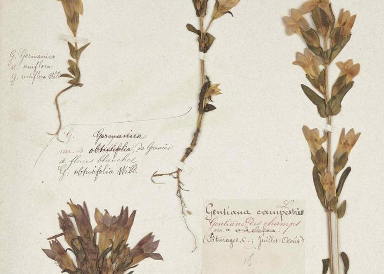 Rendez Vous Aux Musées ! En Fleur ! Histoire Et Géographie De Plantes À Floraison Tardive à Lons le Saunier