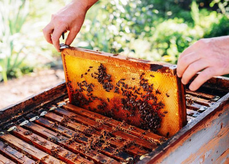 Sensibilisation Au Métier D'apiculteur à Frejus