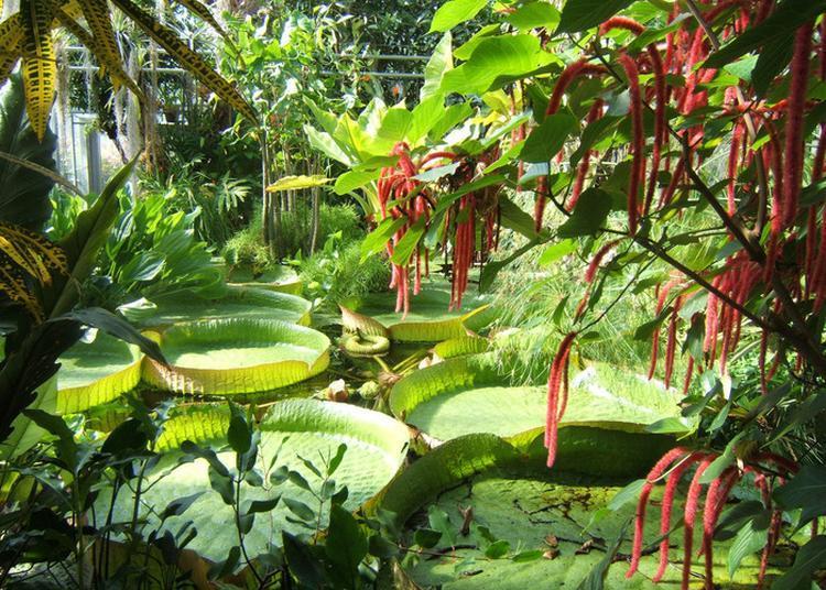 Serres Tropicales Du Jardin Botanique Du Montet à Villers les Nancy