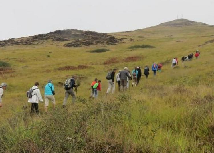 Sortie Nature à La Découverte Du Puy De Wolf, Site Classé Natura 2000 à Firmi