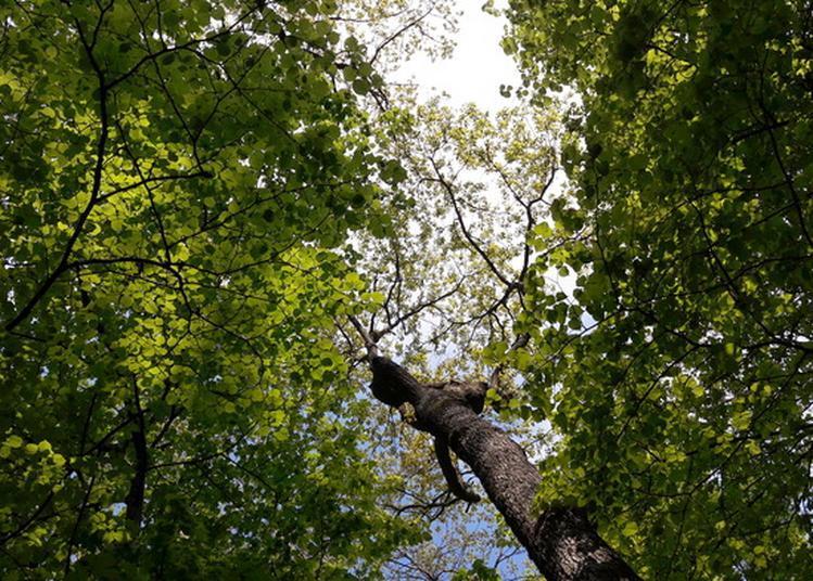 Sortie Nature Dans La Forêt Du Grand Orient à Piney