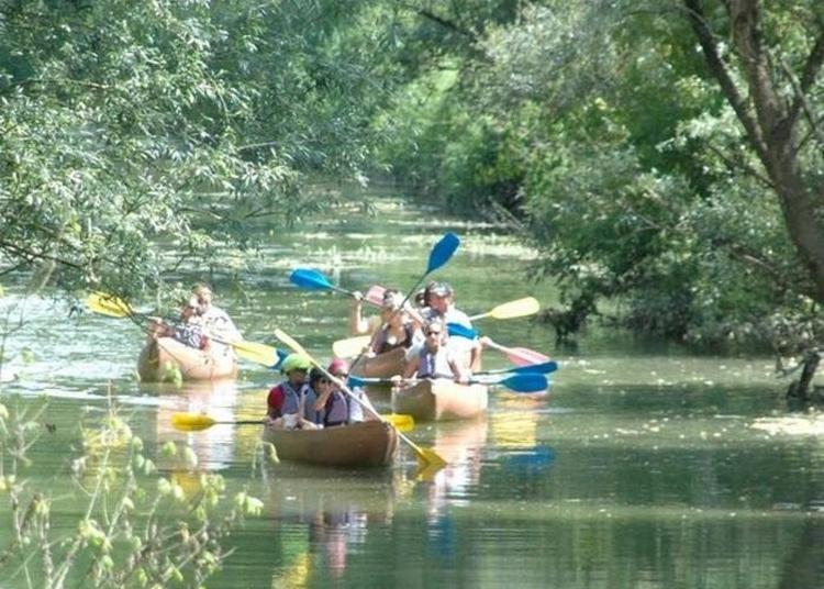 Sorties Découverte En Kayak! à Pont de Vaux
