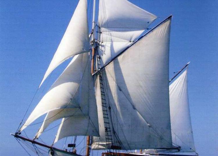 Sorties En Mer à Bord De L'arawak à Royan