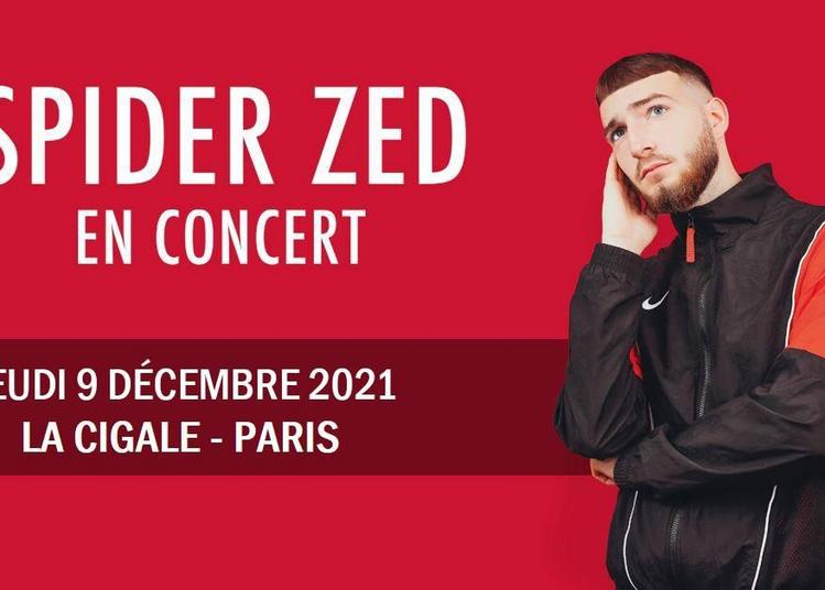 Spider Zed à Paris 18ème