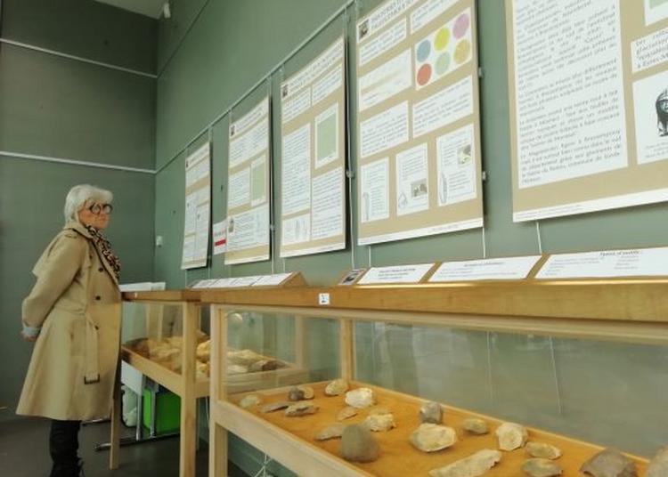 Terres de Chalosse et leurs richesses préhistoriques à Brassempouy