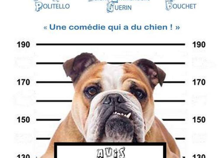 Toutou « Une comédie qui a du chien ! » à Marseille