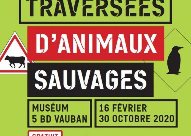 Traversées D'animaux Sauvages à Auxerre