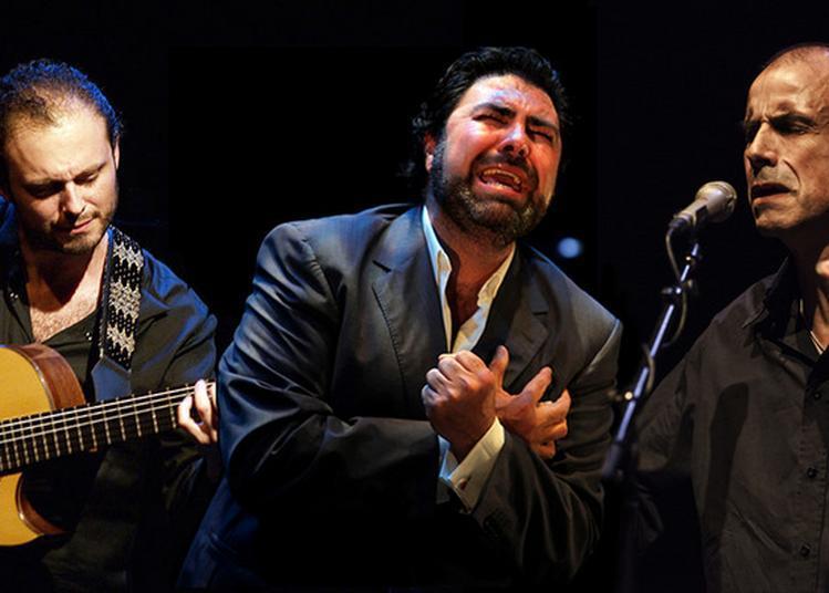 Trovaores - Antonio Campos & Antonio Placer Trio à Grenoble