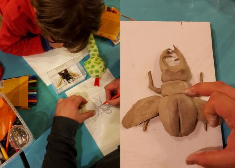 Un Face à Face Avec Les Insectes Et L'art ! C'est Le Moment De Créer Votre Oeuvre En Terre Ou Dessin ! à Nedde