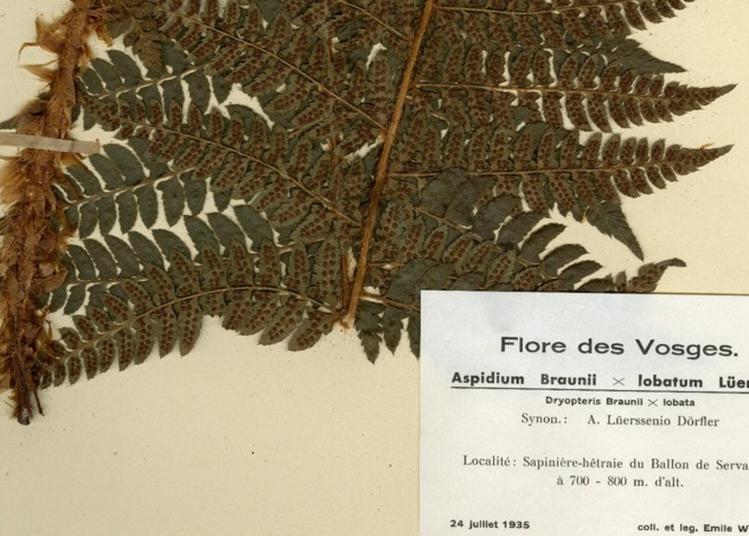 Un Herbier à Travers Les âges à Strasbourg