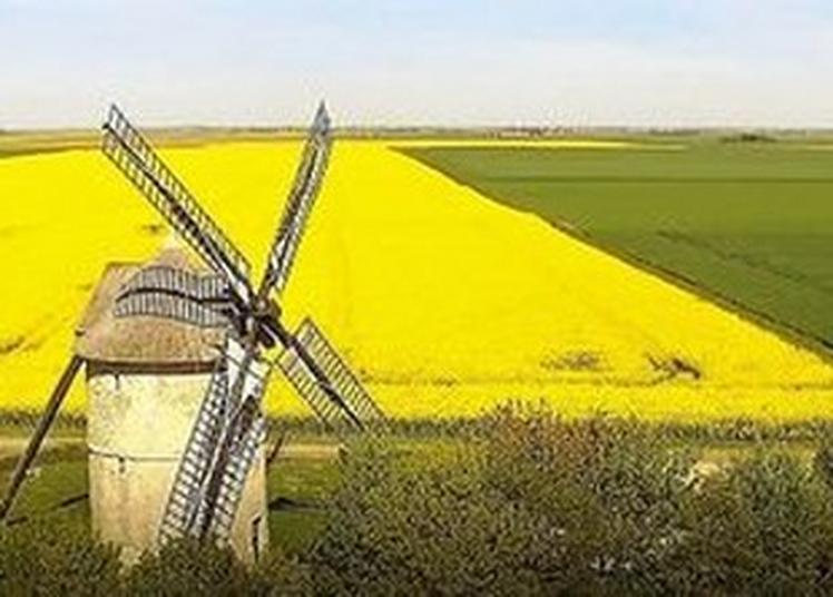 Un Moulin Tour En Beauce Dans Le Vent Et Les Blés à Ozoir le Breuil