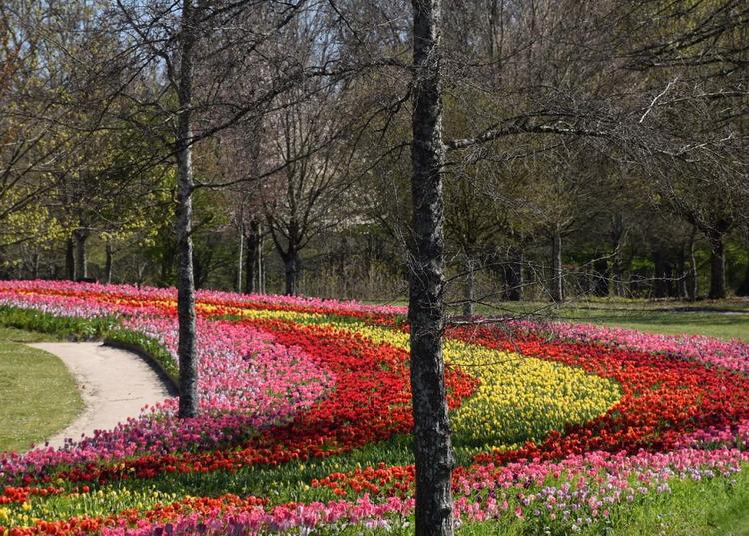 Le Château de Cheverny fête la tulipe ! 2021
