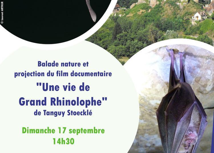 Une Vie De Grand Rhinolophe à Herisson