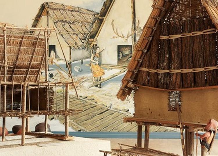 Villages Lacustres Du Néolithique à Clairvaux les Lacs