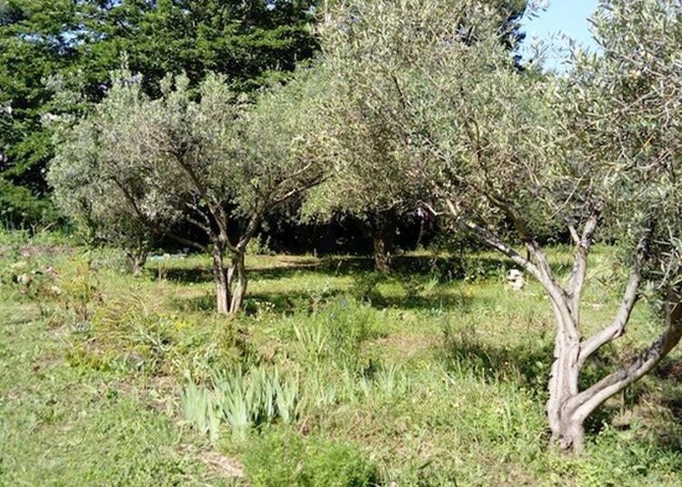 Visite Botanique Du Parc Bortoli Et De La Collection Variétale D'oliviers à Marseille
