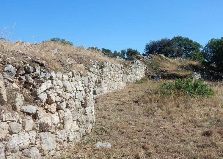 Visite Commentée De L'oppidum Du Baou De Saint-marcel à Marseille