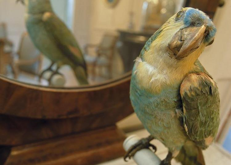 Visite Commentée Des Collections à Rouen