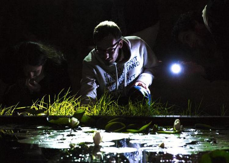 Visite Commentée Du Jardin à La Lampe Torche à Bordeaux