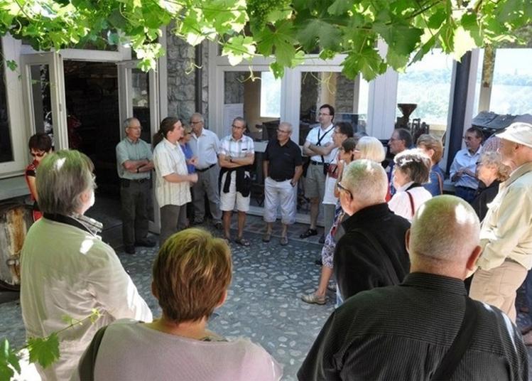 Visite Commentée Du Musée Régional De La Vigne Et Du Vin. à Montmelian