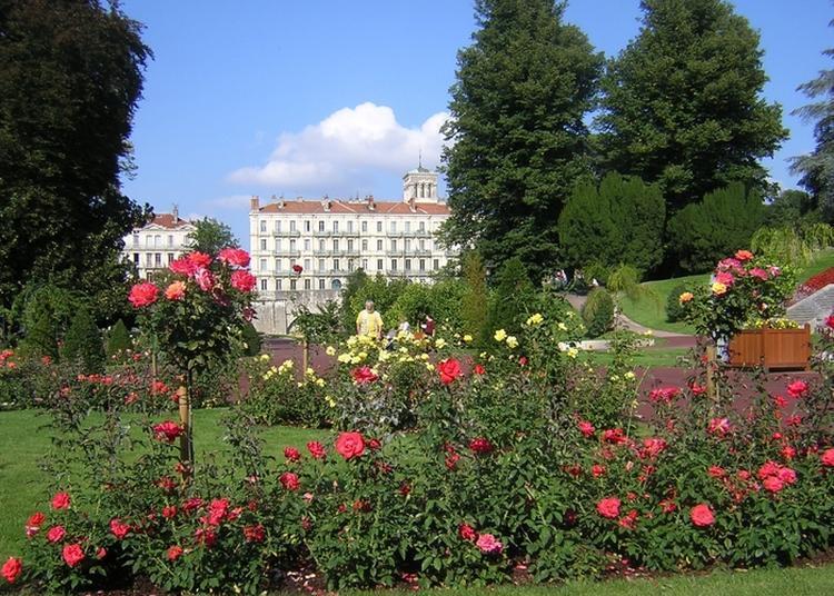 Visite Commentée Sur Le Thème Des Arbres Remarquables Du Parc Jouvet à Valence