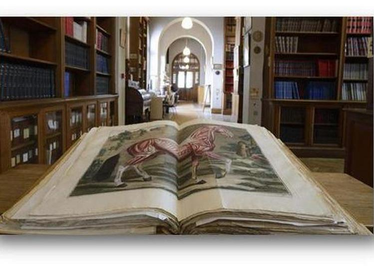 Visite Commentée Volailles Et Oiseaux Sauvages Dans Les Collections De La Bibliothèque D'alfort à Maisons Alfort
