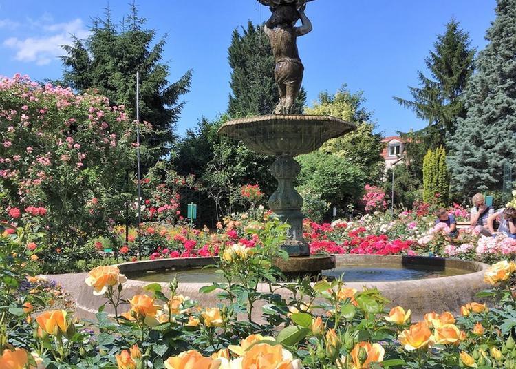 Visite De Découverte De La Roseraie De Schiltigheim
