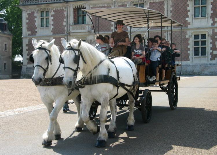 Visite De La Ville En Attelage à Blois