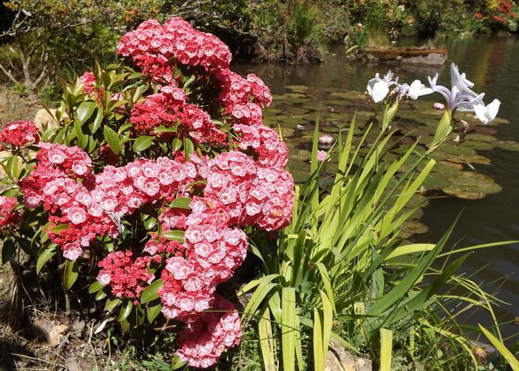 Visite Découverte Du Jardin Botanique Et De Ses 4000 Plantes. à Housseras