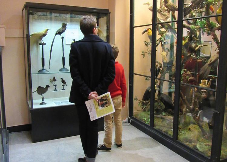 Visite Des Collections Permanentes à Chateaudun
