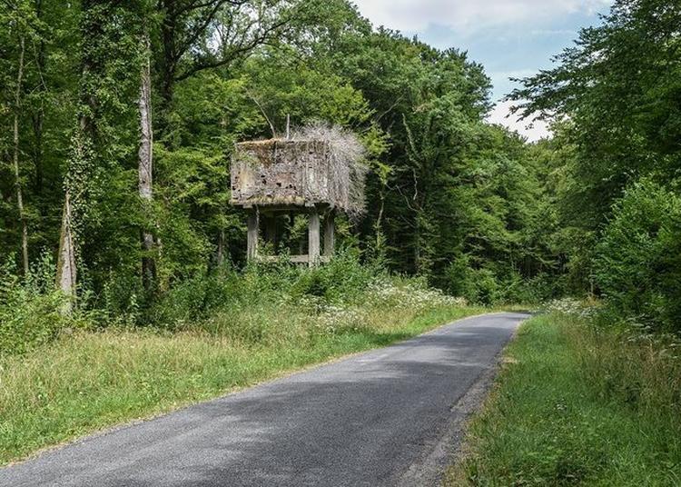 Visite Des Vestiges De 1914-1918 à Merles sur Loison