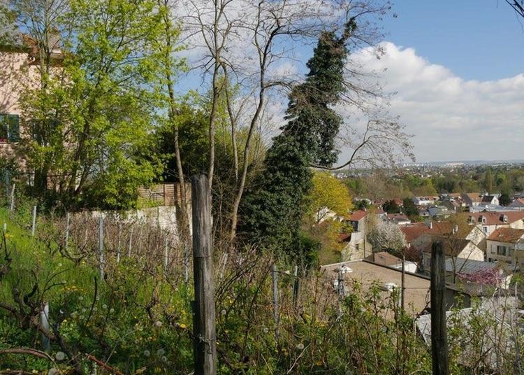 Visite Des Vignes De Bougival