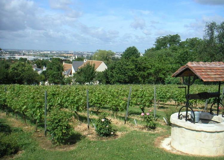 Visite Des Vignes De Sucy à Sucy en Brie