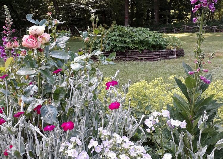 Visite Du Jardin Hêtre Et Charme à Bourg Sous Chatelet