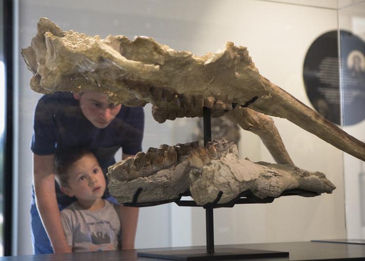 Visite Du Musée à Aurignac