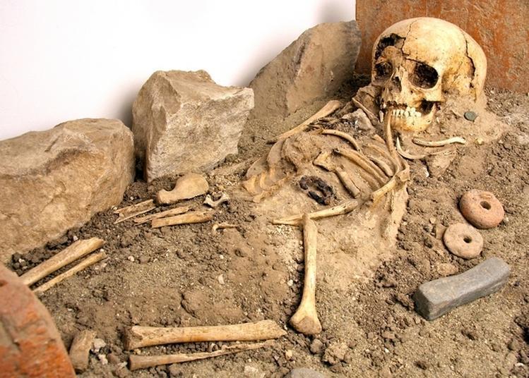 Visite Du Musée Archéologique De Soyons