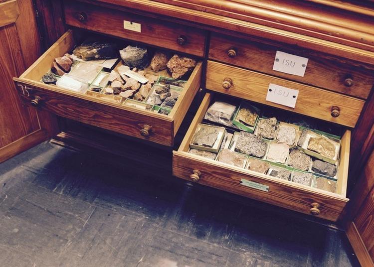 Visite Du Musée De Minéralogie Et De La Collection De Paléontologie à Strasbourg