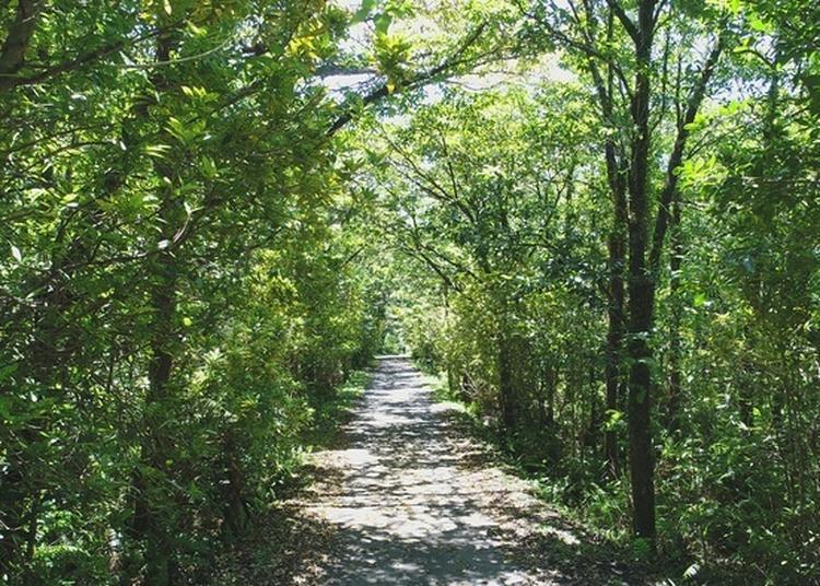 Visite Du Patrimoine Naturel De La Forêt De Mare-longue à Saint Philippe