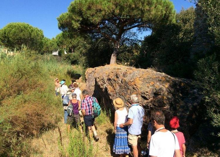 Visite Du Sanctuaire Grec D'aristée à Hyeres