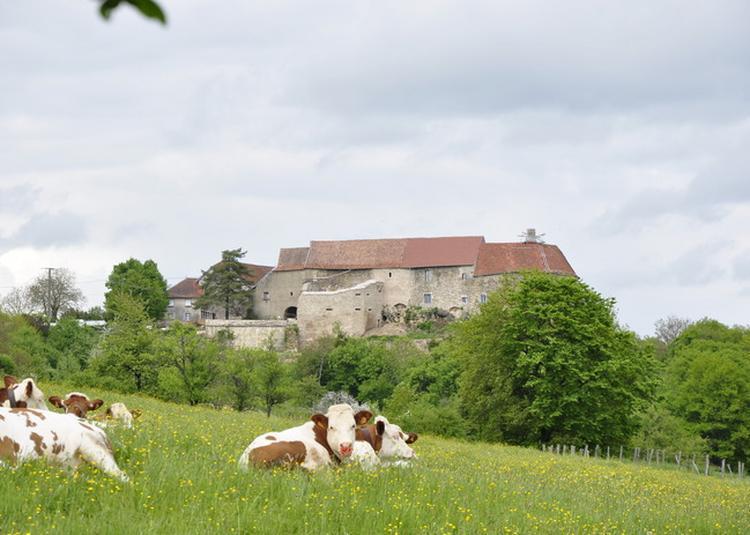 Visite Et Animations Au Château De Montby à Abbenans
