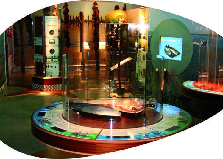 Visite Gratuite Du Musée à Esnandes