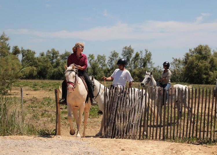 Visite Guidée À Cheval à La Milliere