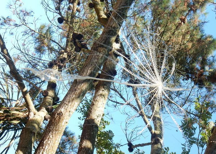 Visite Guidée Combinée Art Et Jardins : Entre Ciel Et Terre à Saint Vaast la Hougue