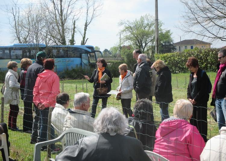 Visite Guidée D'une Safranière à Beguey