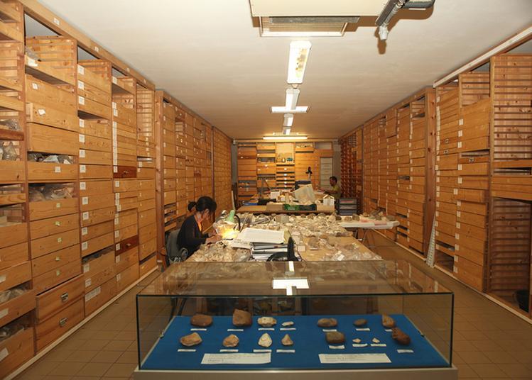 Visite Guidée Dans Les Coulisses Du Musée De Préhistoire De Tautavel