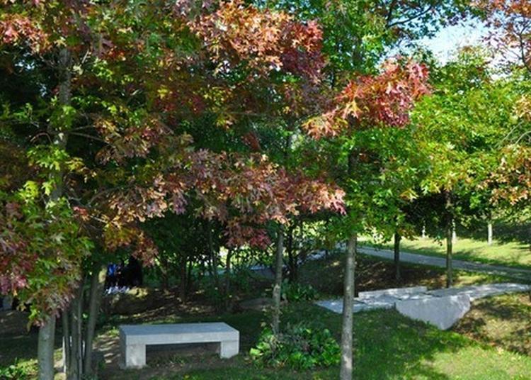 Visite Guidée De L'arboretum à Gagny