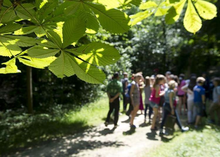 Visite Guidée De L'arboretum De La Vallée-aux-loups à Chatenay Malabry